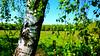 Birch Leaves (obscure.atmosphere) Tags: frühling spring primavera printemps 春 봄 deutschland germany hamburg sonnenschein sonnenlicht licht light ligero lumiere 光 빛 sunlight sunshine 日 태양 sunny sonnig natur nature naturista naturaleza 自然 자연 wald forest bosque selva foret 森林 숲 woods landscape landschaft paisajes region paysage 景色 의풍경 gebüsch bush blätter leaves baum bäume tree trees plants pflanzen gras grass birken birchs atmosphere atmospheric atmosphäre atmosphärisch exposure birch birke himmel heaven sky cielo cieux 天 하늘