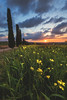 Tuscany - Spring Blossoms (030mm-photography) Tags: rot toskana tuscany valdorcia italy italien reise travel cypress zypressen allee alley road sunset sonnenuntergang nature natur landschaft landscape