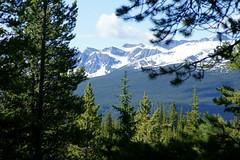 OpalHiills00025 (jahNorr) Tags: summertrip 2012 canadaalbertajaspernationalparkopalhills