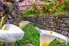 2018_05_13-3 (jrgenet) Tags: cala liriodelagua carmona cantabria primavera spring turismo