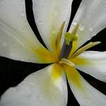 Floral Heart - Coeur de fleur thumbnail