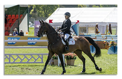 Chatsworth Horse Trails 2018 (johnhjic) Tags: johnhjic nikon nikond850 horse house jump jumps fence fences trees tree flags flag water rider derbyshire uk england horses fance eventing event threeday 3day 3 day japan japanese action sport motion
