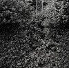 Ladder, Portland (austin granger) Tags: ladder portland correspondence overgrown bushes sidewalk nature escape blackberry film square gf670