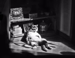 Sunday Mornings....... (LupaImages) Tags: cat feline suzann light morning fur face animal pet lazy resting shadows love family sitting