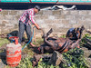 Butchering a buffalo (whitworth images) Tags: disgusting butcher asia people blowtorch meat dead pokhara yard male carcass indiansubcontinent field slaughter legs nepal kaski outdoors buffalo wall gas searing men