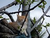Rest. (@ tameristan) Tags: kedi cat tameristan dinlenme rest forest tree ağaç sky gökyüzü nikona900