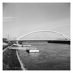 Bratislava, Most Apollo (ravelliphotos) Tags: most apollo bratislava blackandwhite sw bw monochrome analog yashica kodak trix 400 film city bridge