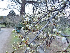 Jardin des serres d'Auteuil (JeanLemieux91) Tags: fleurs flowers flores arbres árbol tree jardin garden auteuil paris îledefrance france mars march marzo hiver winter invierno 2017