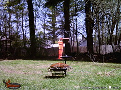 WGI_3206 (scottmcon) Tags: mama bear birdfeeder takedown may 2 2018 mother two cubs solor last years august yearling april 27 separate days
