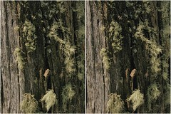 Living Fuzz (turbguy - pro) Tags: 3d crosseye stereo medicinebownationalforest