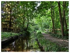 Mühlbach in Stelle-Ashausen (mechanicalArts) Tags: gemeinde stelle ashausen mühlbach bach bäume brook village