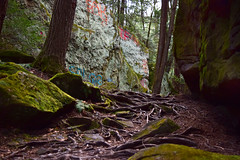 Roots Veins (jna.rose) Tags: roots nature tree naturallight nikon photography moss green graffiti paint trees forest wood woods mills pennsylvania d5300 color growth ground growing rock rocks beautiful beauty mother gray painted bark veins