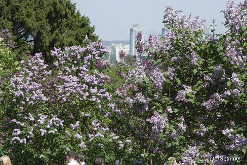 Сад бузків Ботанічний сад імені Гришка InterNetri  Ukraine 14