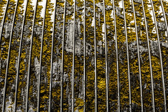 Central Unit Yellow Textures (Mabry Campbell) Tags: centralunit fortbendcounty houston sugarland texas texashistoricalcommission usa unitedstatesofamerica building decay decaying exterior historic image old pattern photo photograph prison rust structure texture yellow yellowmpattern f56 mabrycampbell june 2017 june72017 20170607campbellh6a4634 100mm ¹⁄₆₄₀sec 100 ef100mmf28lmacroisusm