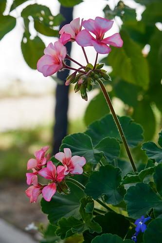 Flower 234 ©  Alexxx Malev