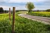 Zaungast (Emanuel D. Photography) Tags: nature landscape grass outdoors field meadow summer sky road agriculture flower farm fence scenics springtime