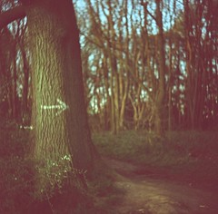 l2 - follow the arrow (johnnytakespictures) Tags: lomo lubitel lubitel2 tlr twinlensreflex film analogue soviet russian photo photography mediumformat 120 kodak ektachrome expired expiredfilm xpro crossprocess crossprocessed hartshill hartshillhayes nuneaton warwickshire evening sun spring afternoon dusk arrow point pointing direction tree paint sign trees nature natural walk pavement path park