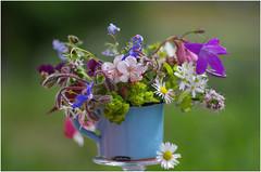 Kleine Sammlung (eulenbilder) Tags: blüten garten wiesenblumen bunt strauss