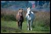 Horses (Teone!) Tags: comacchio cavalli horses ferrara emiliaromagna italia italy