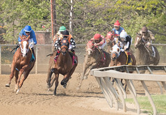 2018 Pimlico Race track (100) (maskirovka77) Tags: pimlico dirt mare race racehorse threeyearold turf yearling