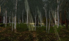 Untitled (noxpinion) Tags: secondlife landscapes birchtrees forest countryside secondlife:region=habitatsprings secondlife:parcel=countryside secondlife:x=17 secondlife:y=190 secondlife:z=21