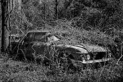 Stop Me (Wayne Stadler Photography) Tags: abandoned preserved junkyard georgia classic automotive derelict overgrown vehiclesrust rusty retro vintage oldcarcity rustographer rustography white