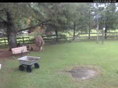 WxTweeter© Image (dmaidon) Tags: weather pws wxtweeter picture forecast parolesoftware