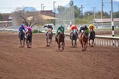 "Rillito Park Racetrack (Andrew ""MuseumAndy"" Boehly) Tags: park racetrack rillito rillitoparkracetrack rillitopark rillitoracetrack horseracing horse tucson arizona oldpueblo southernarizona"