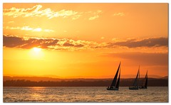 Sailing in Sunset (Bent Kverme) Tags: norway sunset skyline oslo ocean sea water