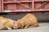 118 (studiofuntas) Tags: cat vientiane laos indochina temple animal straycat backstreet studiofuntas funtas holiday 犬写真家 猫写真家 猫写真 犬写真 動物写真 出張撮影 撮影 スタジオファンタス 地方遠征 portrait ポートレート kids写真 familyphoto kidsphoto couplephoto