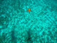 GOPR8636 (urbanlifelens) Tags: mare sea seascape alghero alguer sardegna sardinia underwater fishes pesci seastar stellamarina coast costa sky cielo sun sole