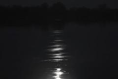 moon river (Mindaugas Buivydas) Tags: lietuva lithuania bw spring april dark darkness river moonriver delta nemunasdelta nemunas night mindaugasbuivydas favoriteplaces memelland whiteinblack