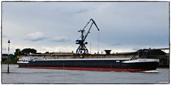MS TALING (rasafo66) Tags: duisburg rhein binnenschiff rheinschiff nrw nordrheinwestfalen deutschland canonsx260