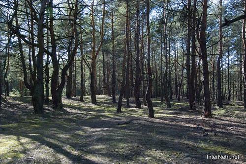 Волинський ліс InterNetri Ukraine 1625256957