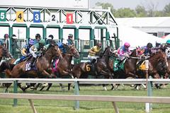 2018 Pimlico Race track (80) (maskirovka77) Tags: pimlico dirt mare race racehorse threeyearold turf yearling