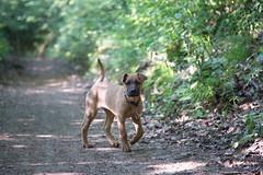 Bibi0516-2059 (adam.leaf) Tags: canon 6d 24105l leafling forest dog