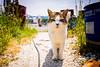 thrivers on islands #127 (Oki-Shima Island, Shiga) (Marser) Tags: xt10 fujifilm raw lightroom japan shiga island cat lake lakebiwa biwako 滋賀 沖島 琵琶湖 猫 貓