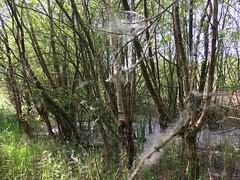 fairy dust (bloomspix) Tags: walknow somerset avalon artist walk