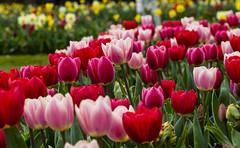 Flowers. (ost_jean) Tags: nikon d5300 tamron sp 90mm f28 di vc usd macro 11 f004n ostjean