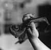 The violinist II (K.Pihl) Tags: bokeh violin darkroom print blackwhite schwarzweiss hands film kodaktrix400800 hasselblad500cm monochrome pellicolaanalogica sonnar150mmf40 bw hc110b analog violinist