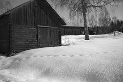 Texture/GW690II/Delta100 (Jonas.Nilsson) Tags: rural winter winterwonderland sweden gw690ii fujigw690ii ilfordfilm ilford filmphotography film filmisnotdead mediumformatfilm mediumformat homedeveloped believeinfilm blackandwhite blackandwhitefilm monochrome 120film 6x9 d76