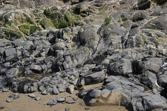 Oceanside beach, Oregon (nikname) Tags: oceansidebeach oregonbeaches beaches beachrocks rocks mossyrocks