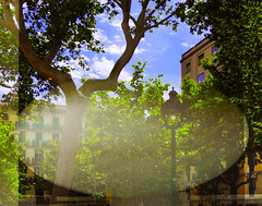 Reflecting store window (chrisk8800) Tags: storewindow window reflecting street buildings trees sky barcelona