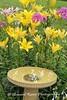 Benton Daylilly Farm (45) (Framemaker 2014) Tags: benton daylily farm garden flowers columbia county pennsylvania endless mountains united states america