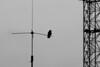 Crow (Fatalii01) Tags: crow bird antenna industry bw blackandwhite silhouette
