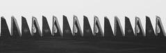 Denti / Teeth (Pioppo67) Tags: denti canon 80d macromondays jagged th teeth sega sigma105mm