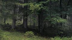 Alpine Forest (Netsrak) Tags: kleinwalsertal wald forest woods green grün nebel mist fog