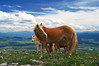 В Конявската планина (sevdelinkata) Tags: grass horses mountain sky bulgaria