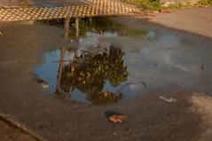 Reflexo (OctavioHenriq) Tags: reflexo agua villa lobos vila parque liberdade