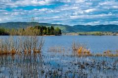 High Water (bjorbrei) Tags: lake water shore marsh marshland bushes forest hills countryside sky clouds maridalen kjelsås maridalsvannet lakemaridal oslo norway